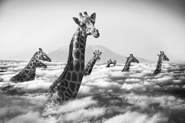 "La série ""Hakuna Matata"" ©Thomas Subtil"